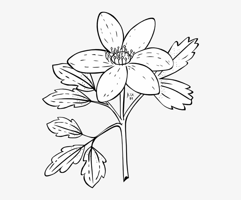 Jasmine flowers line clipart black and white jpg royalty free library Jasmine Clipart Black And White – 2.000.000 Cool Cliparts, Stock ... jpg royalty free library