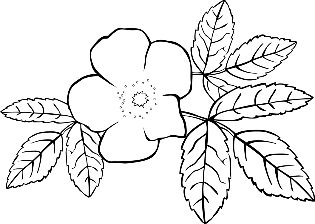 Jasmine plant clipart png black and white jpg transparent library HD Graphic Transparent Prickly Wild Rose Color Line Art - Jasmine ... jpg transparent library
