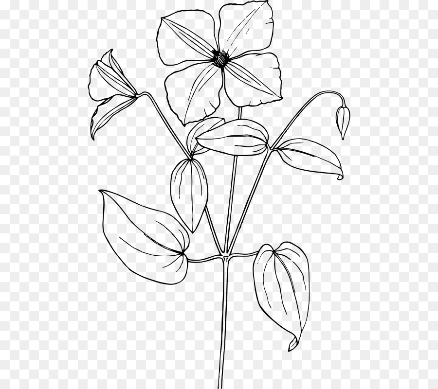 Jasmine plant clipart png black and white banner royalty free library Black And White Flower png download - 540*800 - Free Transparent ... banner royalty free library