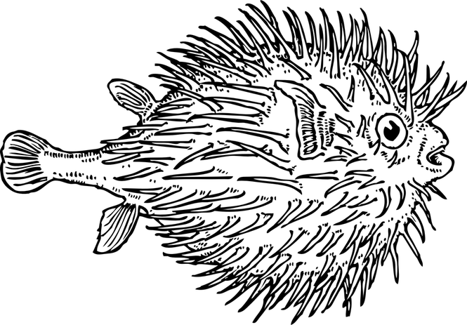 Jawless fish clipart clip freeuse download Fish Clipart Black And White Outline - The Best Fish 2018 clip freeuse download
