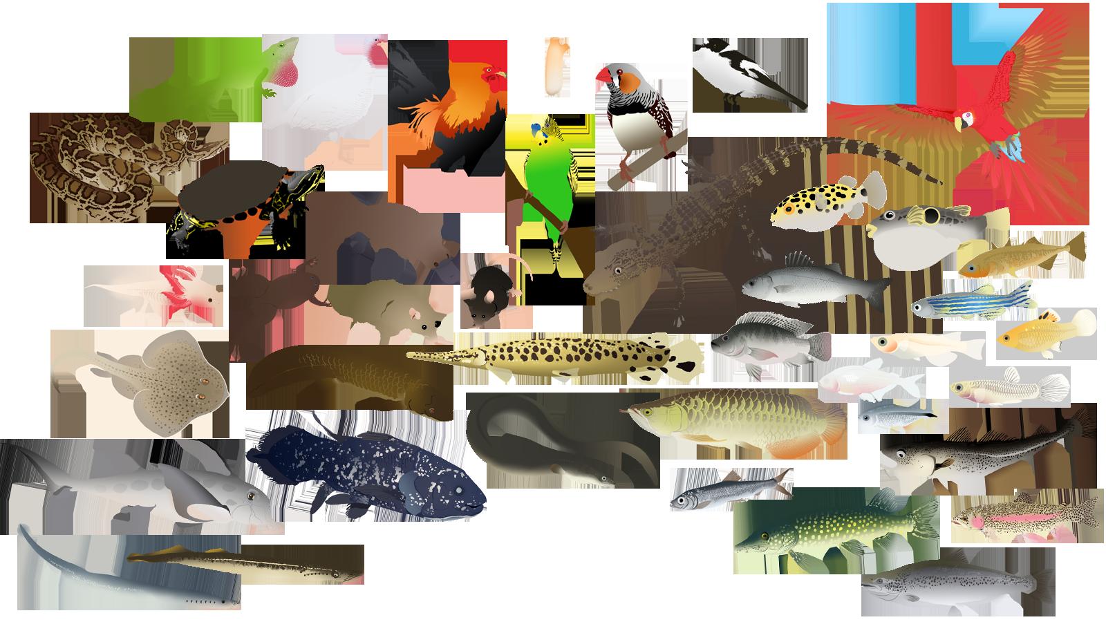 Jawless fish clipart jpg free stock Ego sum Daniel jpg free stock