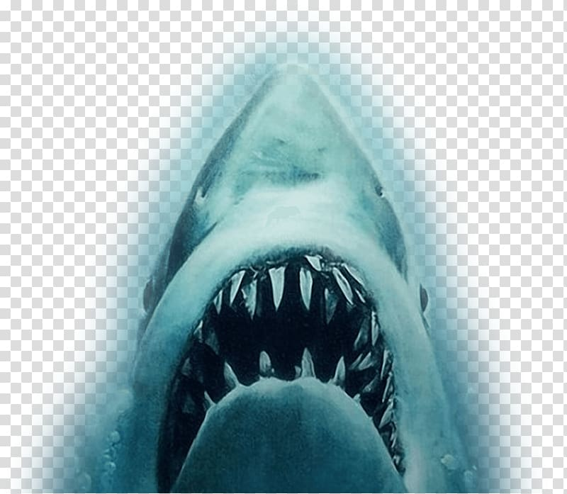 Jaws clipart vector black and white download YouTube Shark Jaws Trailer Film, white shark transparent background ... vector black and white download