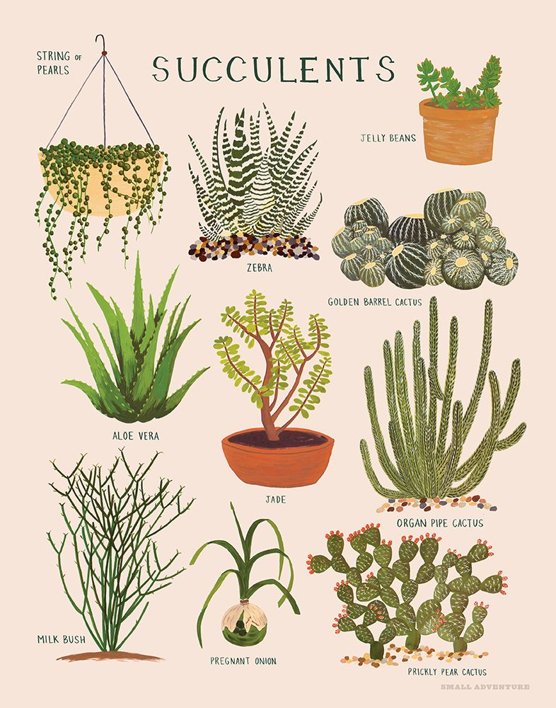 Jelly bean succulant plant clipart black and white royalty free download Gift Guide: For Her | For the Home | Plants, Planting ... royalty free download
