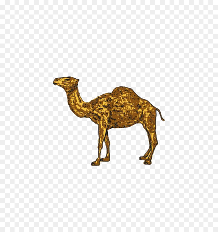 Joe camel clipart graphic royalty free download Dromedary Camel png download - 540*960 - Free Transparent ... graphic royalty free download