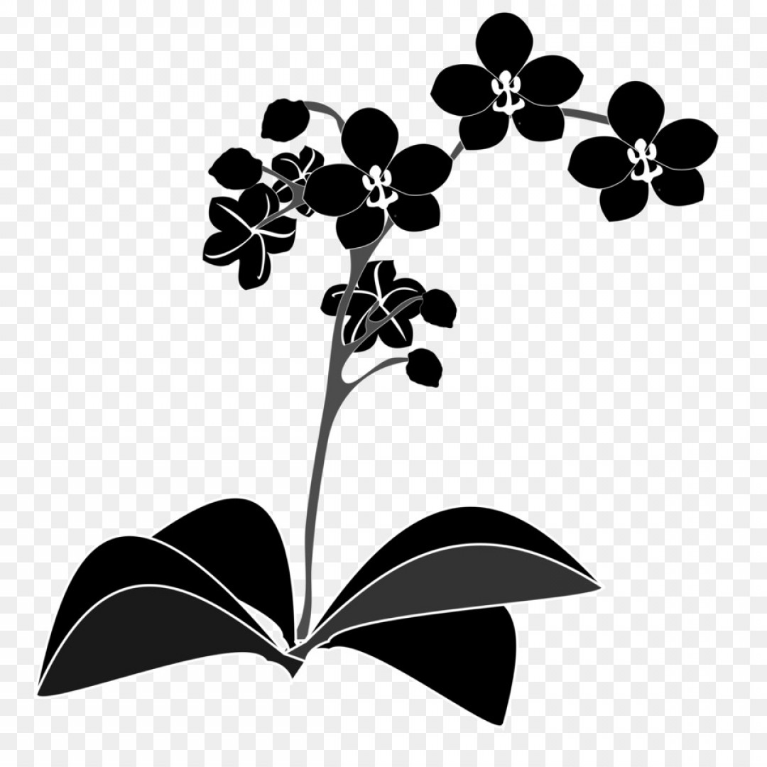 Jpeg clipart of leaf branch use for logos picture library Png Orchids Clip Art Orchid Vector | SarahGardan picture library