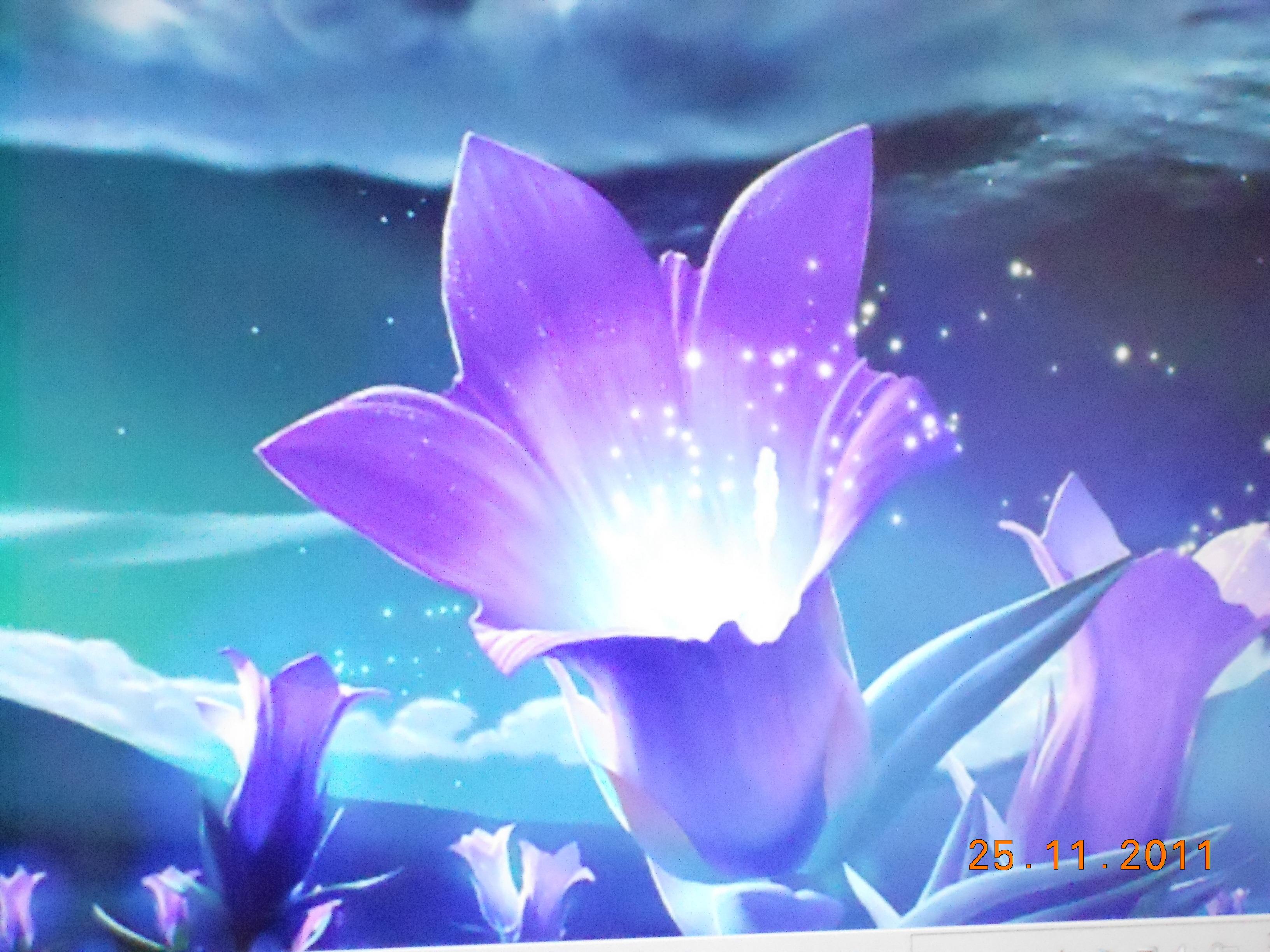 Jpeg flower images jpg freeuse stock flower.jpeg jpg freeuse stock