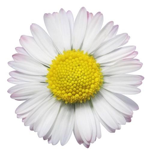 Jpeg flower images svg free stock Jpeg flower images - ClipartFest svg free stock