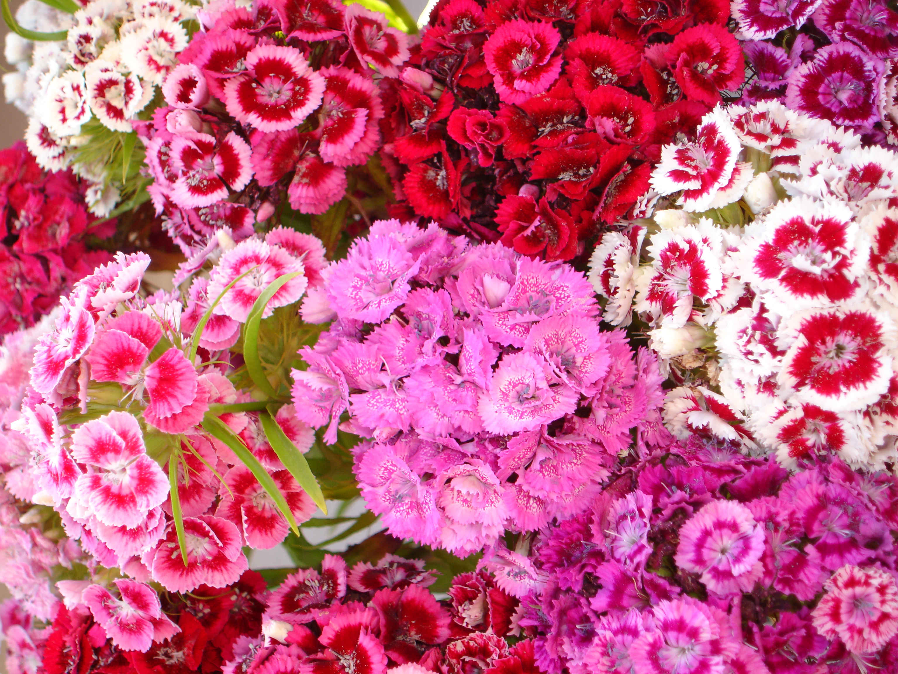 Jpeg flower images graphic royalty free File:June Summer Flowers.jpg - Wikimedia Commons graphic royalty free