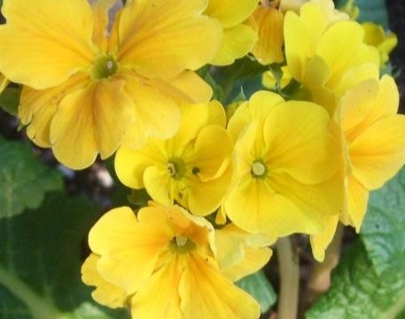 Jpeg flower images image free library Analog-3 - Digital Media image free library