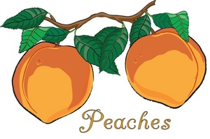 Juicy peach clipart png transparent download Peach clipart image two fresh juicy peaches growing on a – Gclipart.com png transparent download