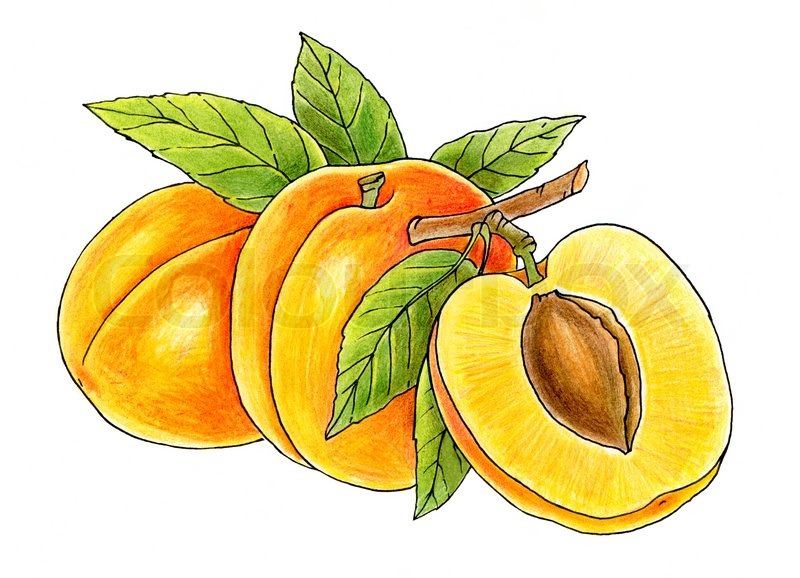 Juicy peach clipart banner black and white Juicy Peach Clipart - Free Clipart banner black and white