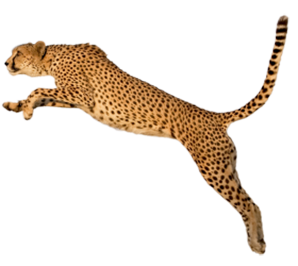 Jumping cat free clipart jpg transparent King Cheetah Felinae Clip art - Jump leopard 600*536 transprent Png ... jpg transparent