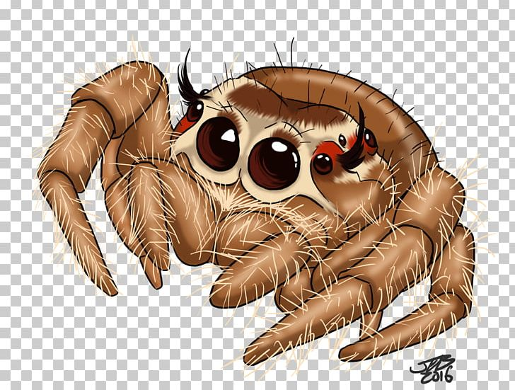 Jumping spider clipart banner download Jumping Spider Drawing Tattoo PNG, Clipart, Animal, Art ... banner download