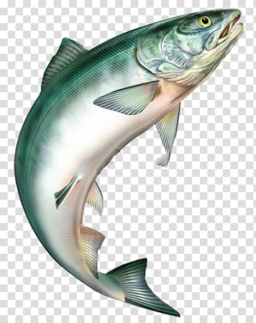 Jumping trout clipart jpg freeuse Sushi Salmon Rainbow trout Food, Jumping fish, gray fish ... jpg freeuse