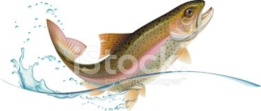 Jumping trout clipart banner transparent stock Jumping Trout stock vectors - Clipart.me banner transparent stock