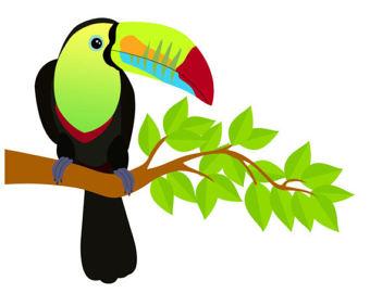 Jungle bird clipart graphic black and white Toucan Bird Clipart | Free download best Toucan Bird Clipart ... graphic black and white