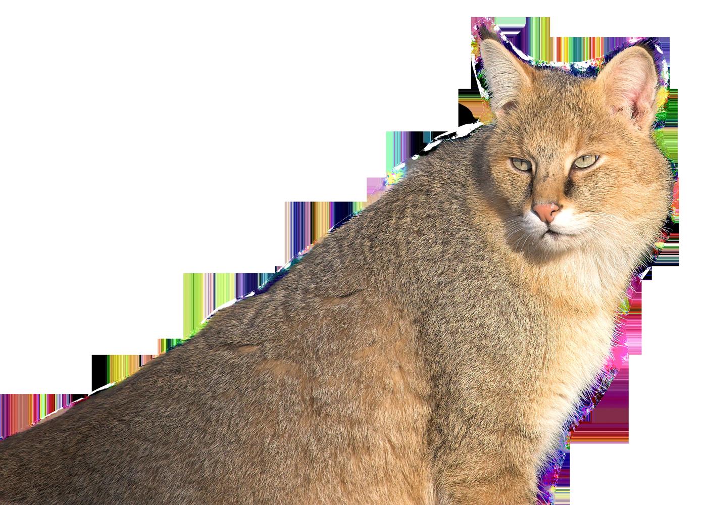 Jungle cat clipart picture library Jungle Cat PNG Image - PurePNG | Free transparent CC0 PNG Image Library picture library