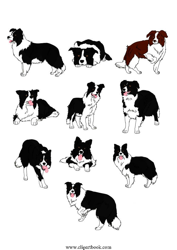 Just a boy and his dog clipart boarders stock LE - Realistic Border Collie dogsfree vector clipart designs ... stock
