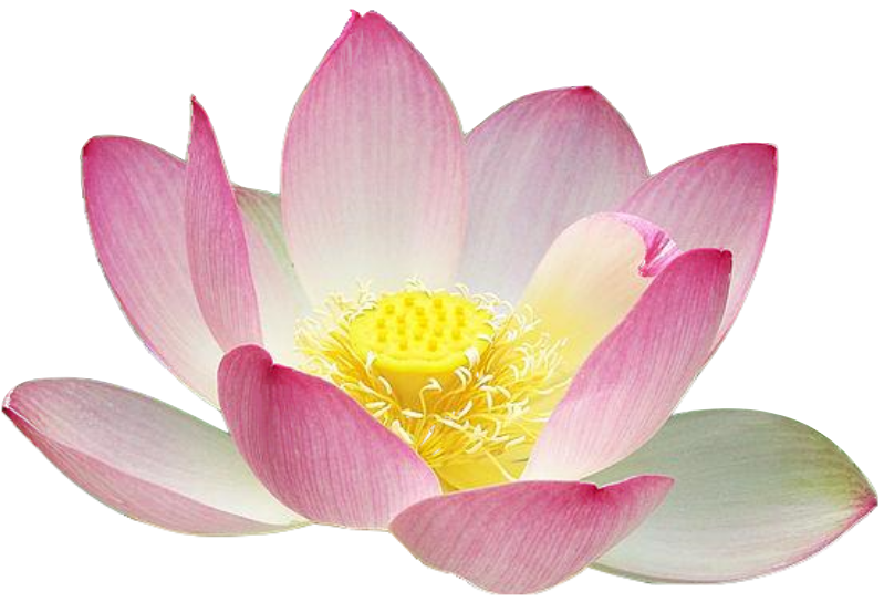 Kamal flower clipart banner library download Kamal Flower Clipart - Clip Art Library banner library download