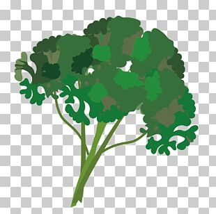Karpas clipart clipart free library Parsley Leaf Vegetable Karpas Herb PNG, Clipart, Anise ... clipart free library