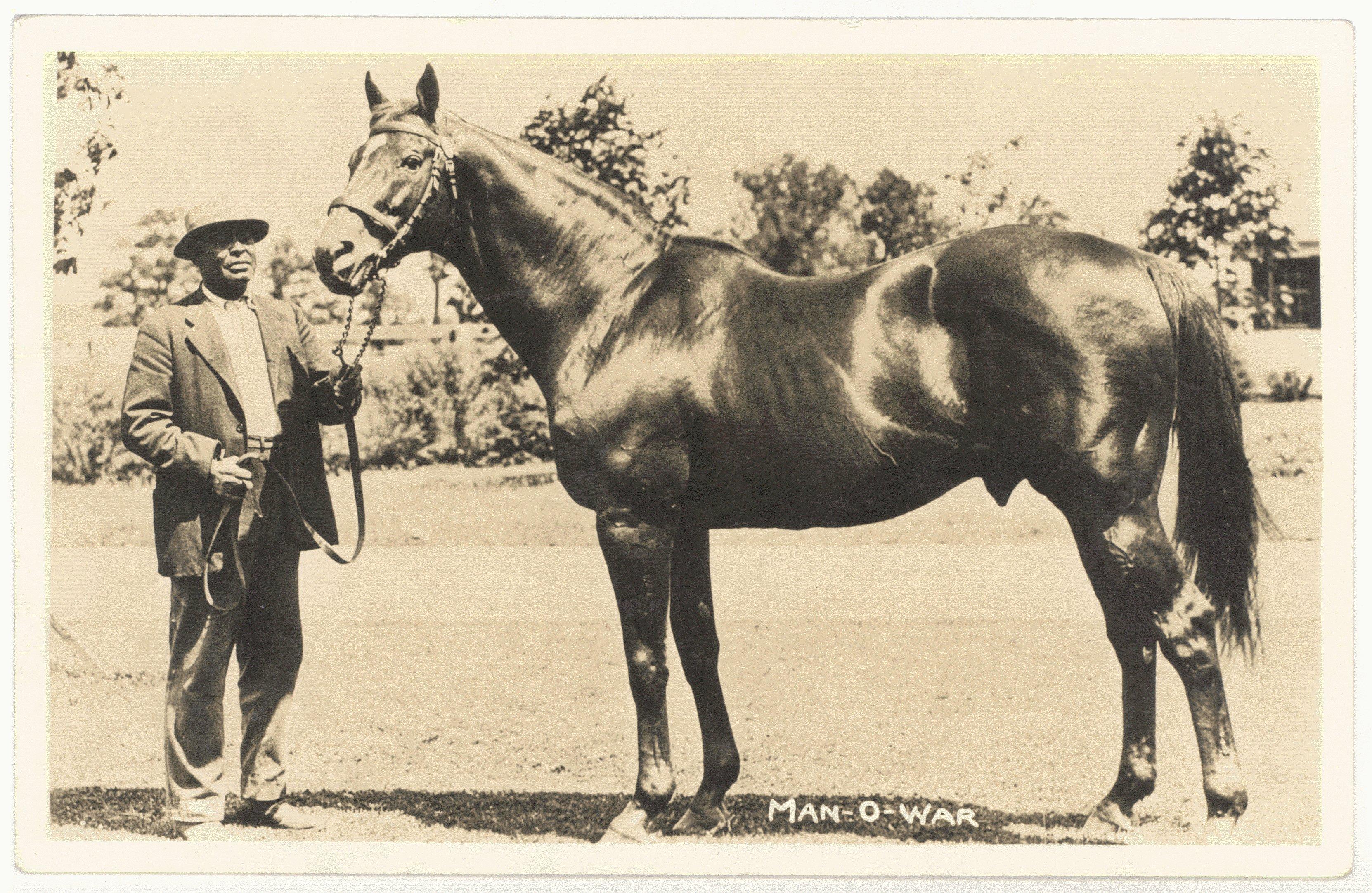 Kentucky horse park clipart vector stock Man o\'War Turned 100 and the Kentucky Horse Park is Having a Party vector stock