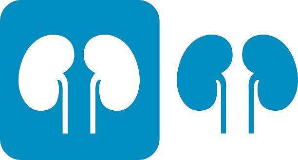 Kidney pictures clipart freeuse Kidney clipart » Clipart Portal freeuse