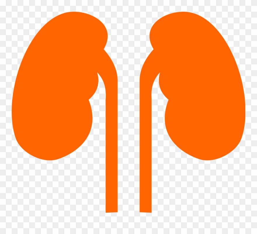 Kidneys clipart jpg Kidneys Noun 524431 Cc Orange - Orange Kidneys Clipart ... jpg