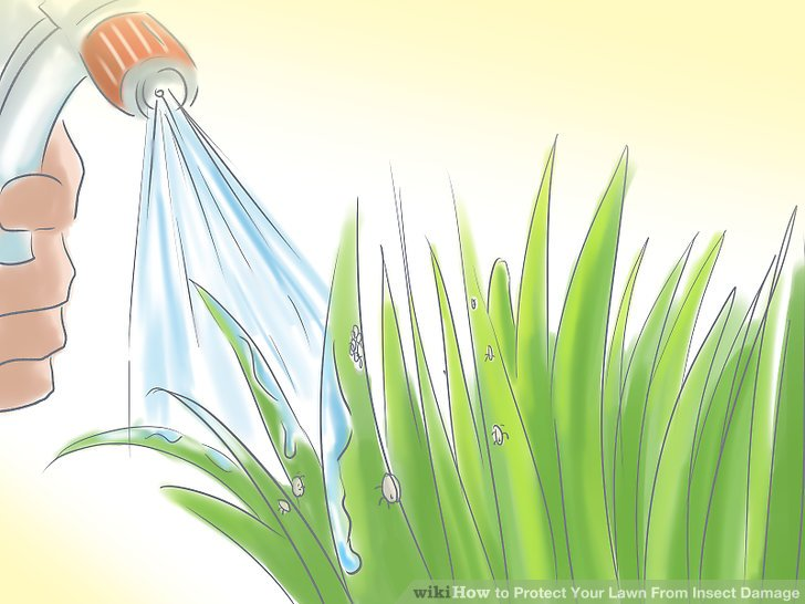 Killing pest in plant clipart black and white vector black and white stock 4 Ways to Protect Your Lawn From Insect Damage - wikiHow vector black and white stock