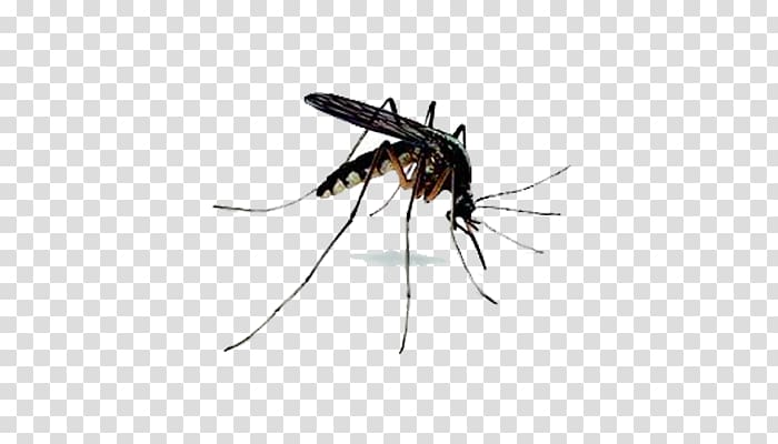 Killing pest in plant clipart black and white picture free stock Mosquito Insect Fly Bug zapper Racket, mosquito transparent ... picture free stock