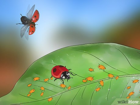 Killing pest in plant clipart black and white vector freeuse How to Keep Aphids Away Using Eco Friendly Methods: 8 Steps vector freeuse