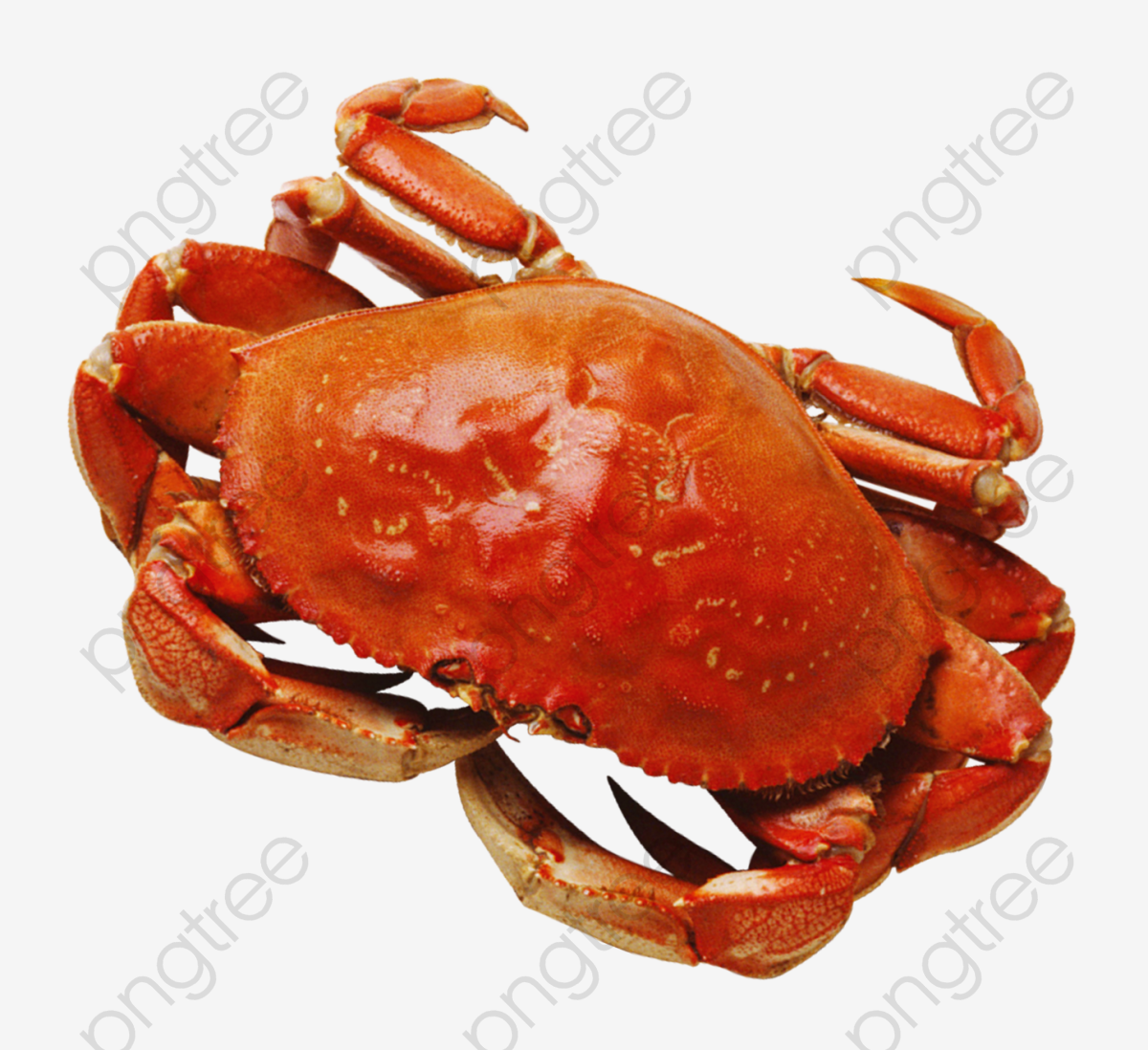 King crab clipart jpg Download for free 10 PNG Crabs clipart king crab Images With ... jpg