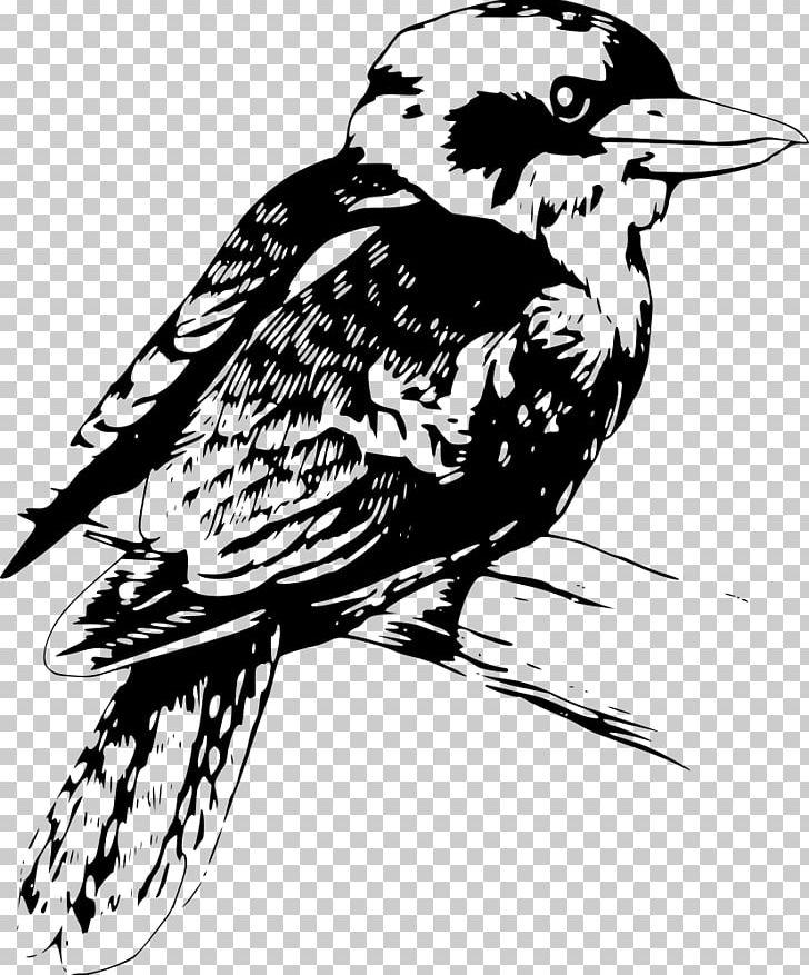 Kookaburra clipart free image freeuse Drawing Kookaburra PNG, Clipart, Art, Artwork, Beak, Bird ... image freeuse