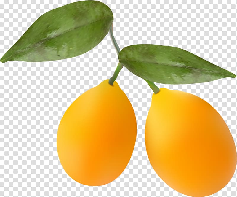 Kumquat clipart clipart royalty free library Kumquat Orange, Orange transparent background PNG clipart | HiClipart clipart royalty free library