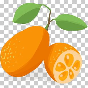 Kumquat clipart black and white library Kumquat PNG Images, Kumquat Clipart Free Download black and white library