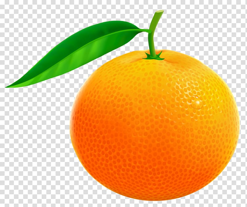 Kumquat clipart png royalty free stock Kumquat Mandarin orange Clementine Tangerine Rangpur, tree ... png royalty free stock