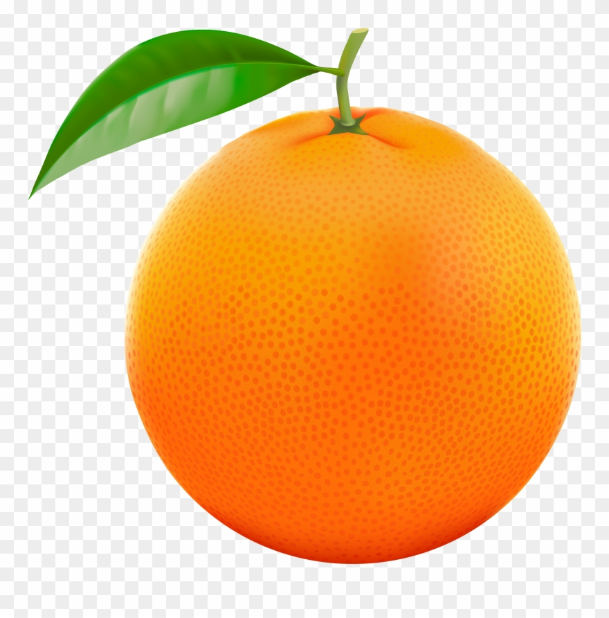 Kumquat clipart picture black and white Orange,Fruit,Grapefruit,Citrus,Mandarin orange,Plant,Orange,Leaf ... picture black and white