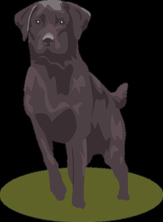 Labrador dog clipart graphic black and white stock Free Labrador Retriever PNG Transparent Labrador Retriever.PNG ... graphic black and white stock