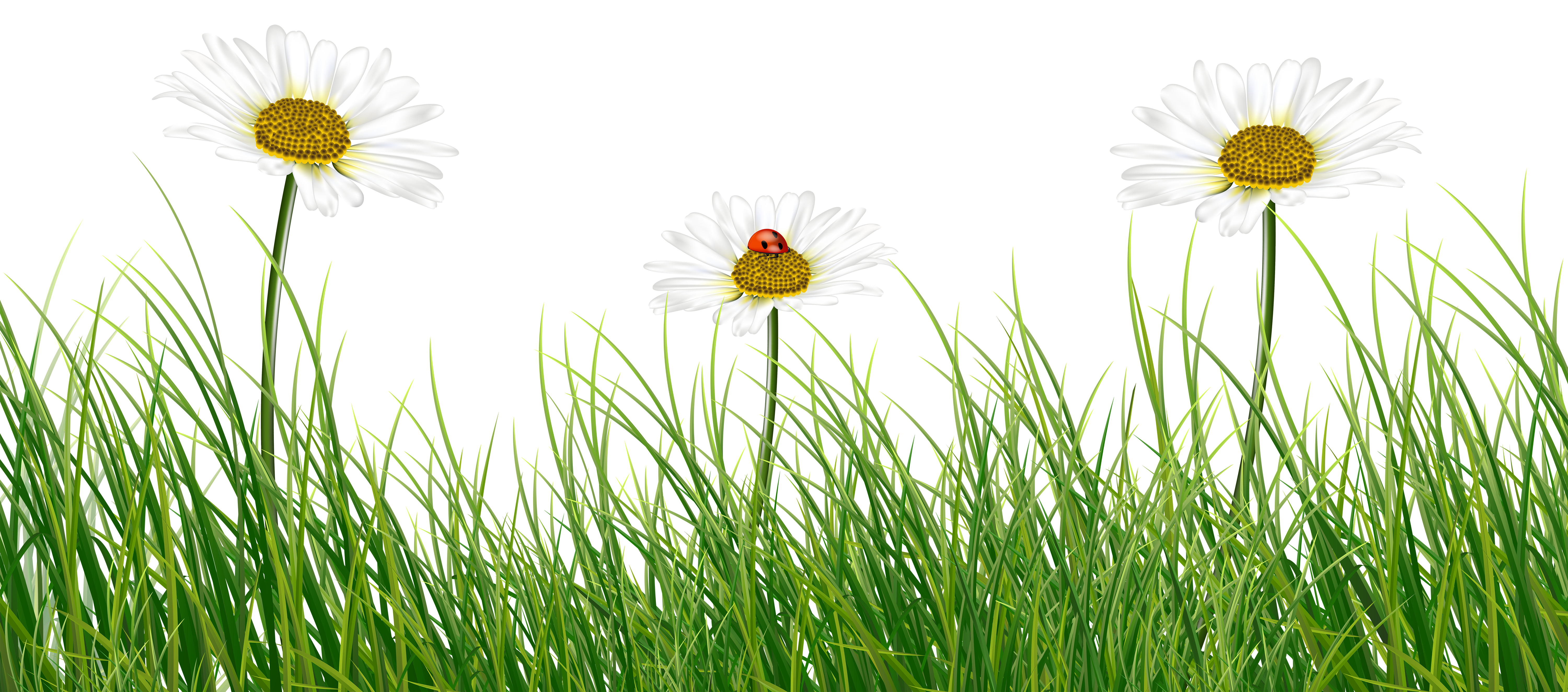 Ladybug on a flower clipart free banner library library Green Grass with Daisies and Ladybug | Gallery Yopriceville - High ... banner library library