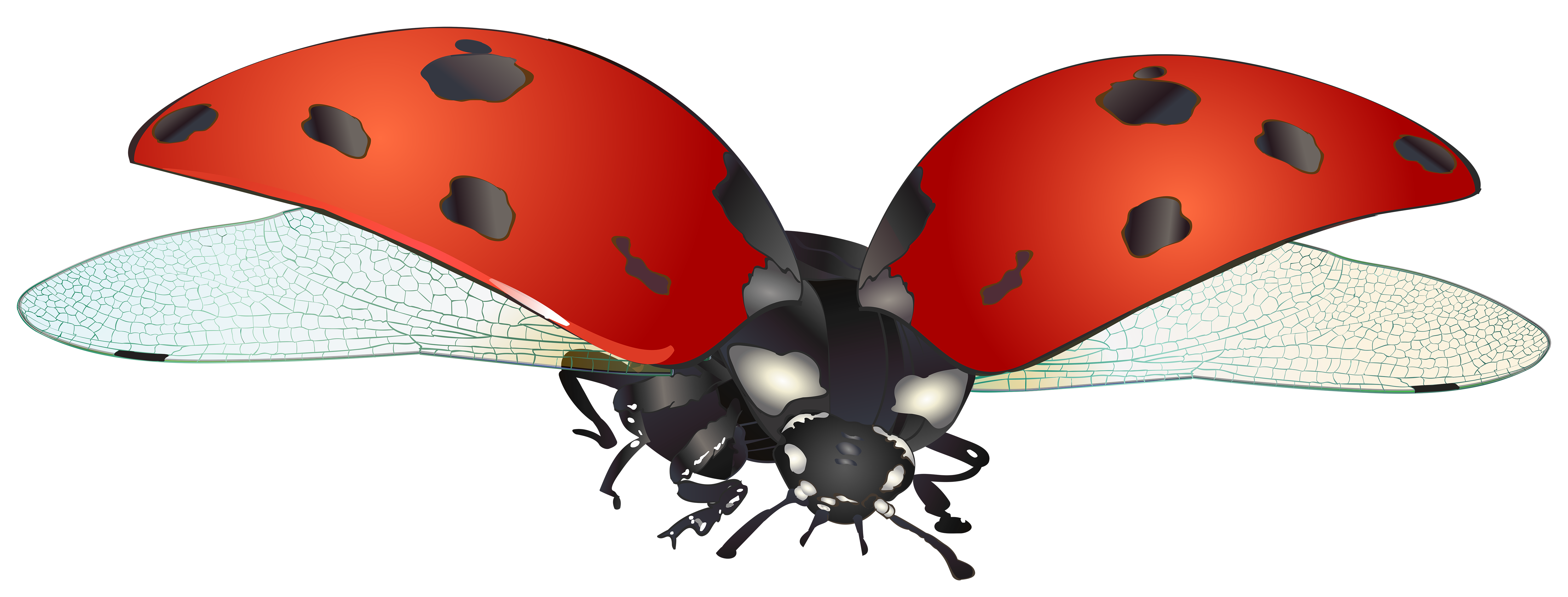 Ladybug flying clipart banner library library Flying Ladybug PNG Clip Art Image | Gallery Yopriceville ... banner library library