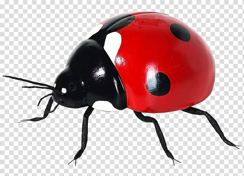 Ladybug icon clipart png royalty free Coccinella septempunctata Insect Icon, Ladybug transparent ... png royalty free