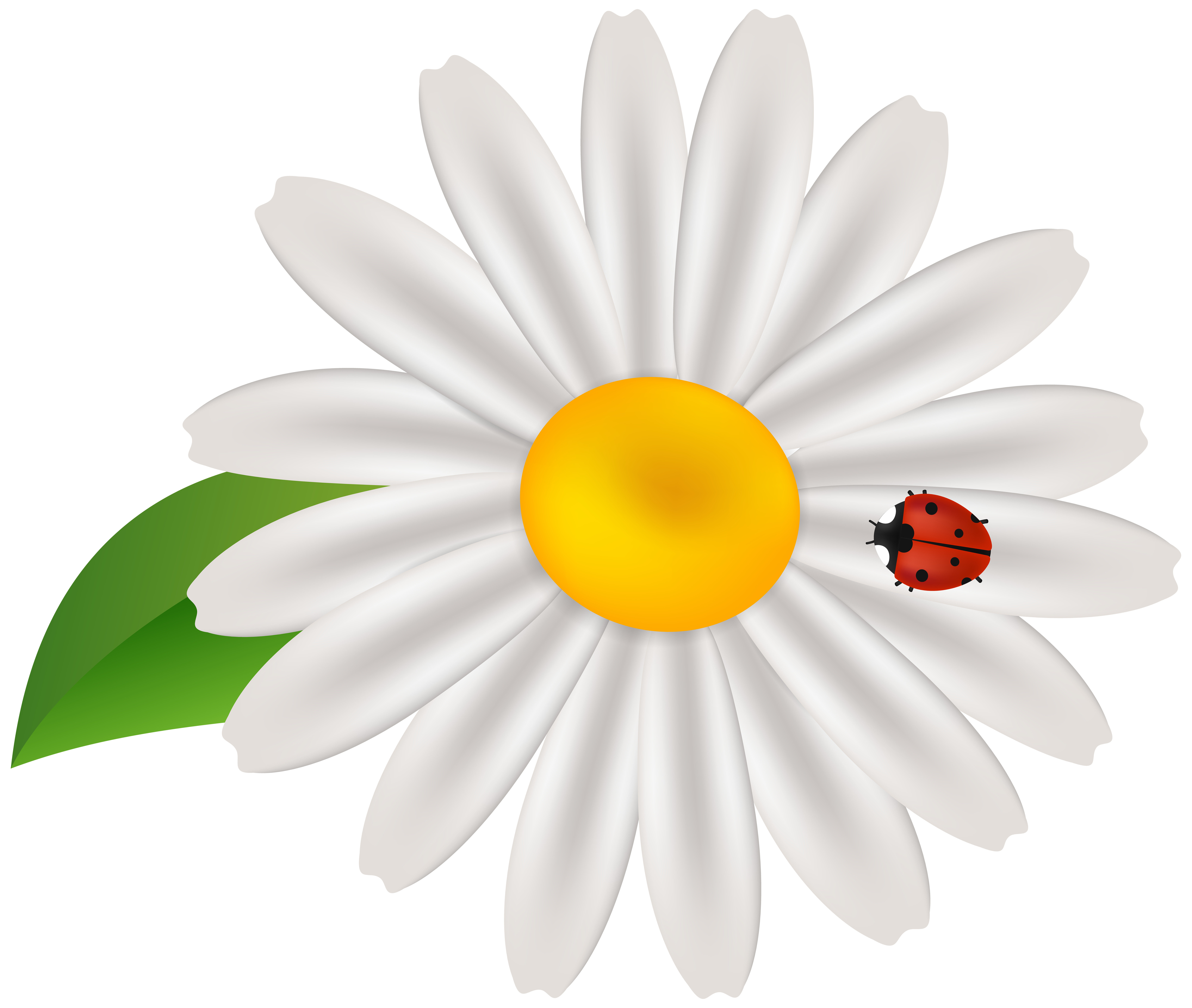 Ladybug on a flower clipart free graphic download Spring Flower with Lady Bug Transparent Clip Art | Gallery ... graphic download