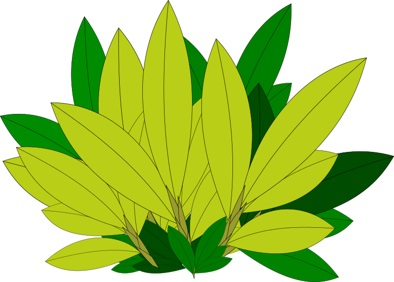 Large leaf clipart graphic freeuse stock Large leaf clipart 7 » Clipart Portal graphic freeuse stock