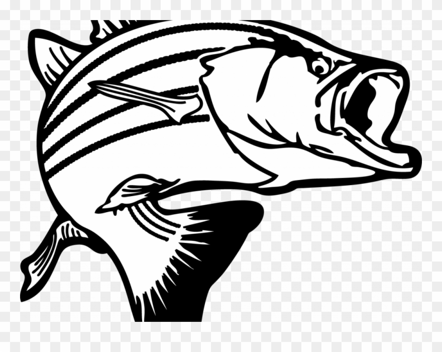 Large mouth bass clipart black and white stock Download Clip Art Fish - Largemouth Bass Clipart Png Transparent Png ... black and white stock