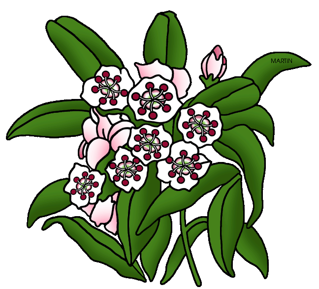 Laurel flower clipart vector black and white download United States Clip Art by Phillip Martin, Pennsylvania State Flower ... vector black and white download