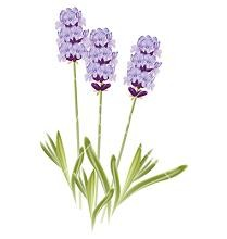 Lavendar clipart svg free library Free Lavender Cliparts, Download Free Clip Art, Free Clip Art on ... svg free library