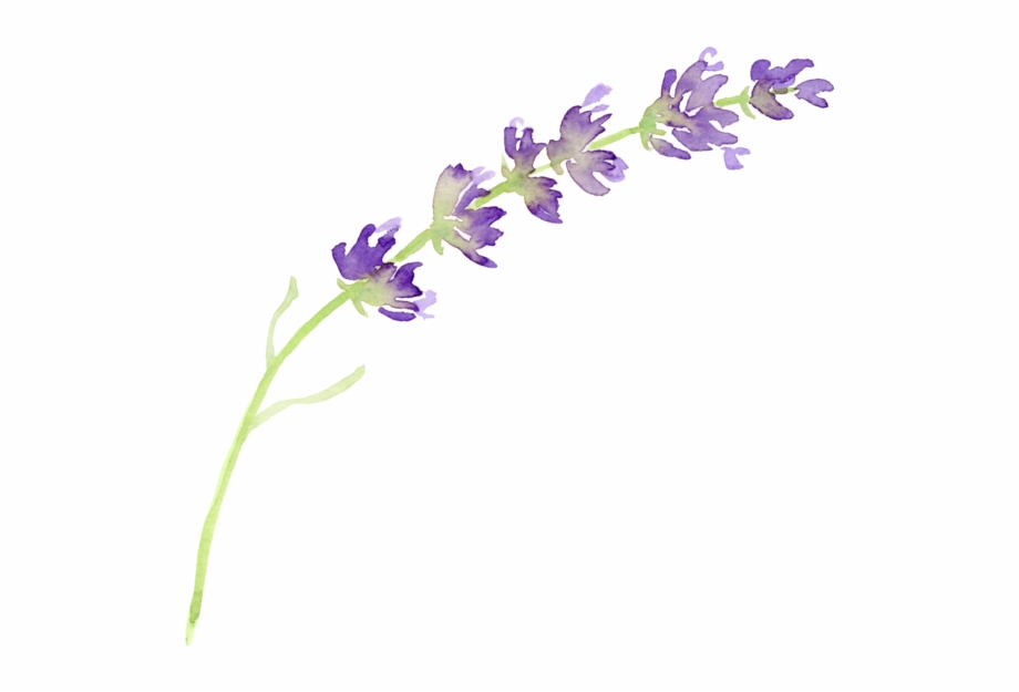 Lavender clipart png vector freeuse library Lavender Clipart Png - Transparent Lavender Clip Art, Transparent ... vector freeuse library