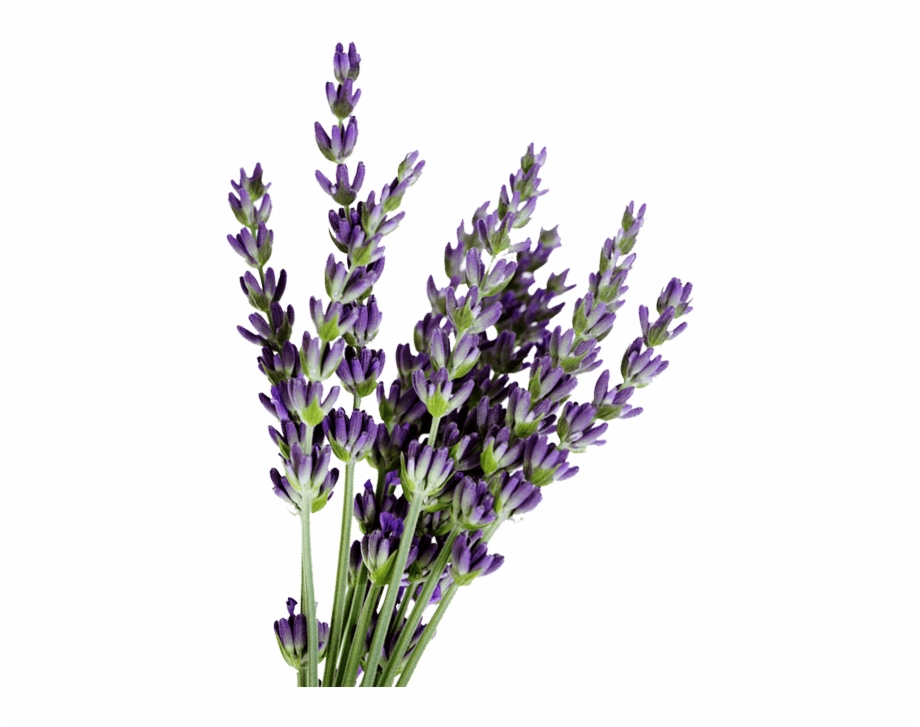 Lavender clipart png graphic library stock Lavender For Sale - Lavender Bundle Png Free PNG Images & Clipart ... graphic library stock