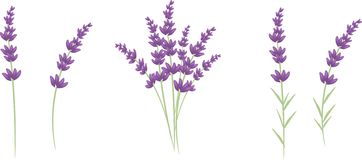 Lavender clipart vector graphic stock Lavender Clipart Free | Free download best Lavender Clipart Free on ... graphic stock