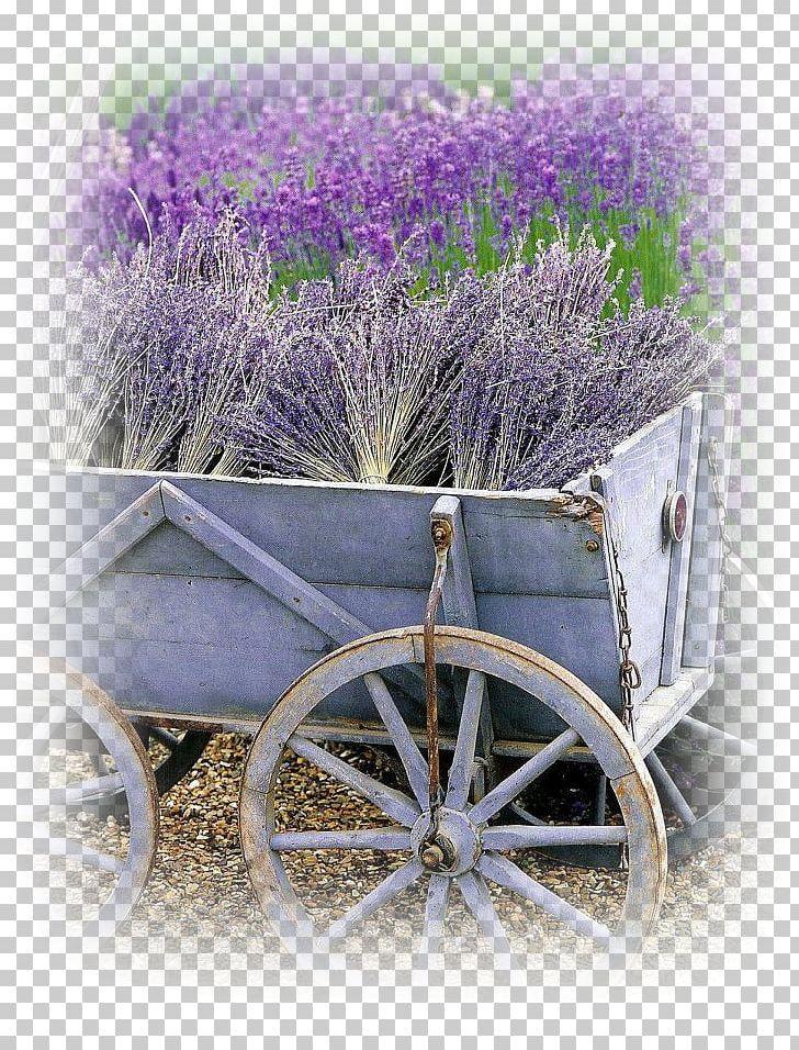 Lavender field clipart black and white stock Lavander Field French Lavender Garden Flower PNG, Clipart, Color ... black and white stock