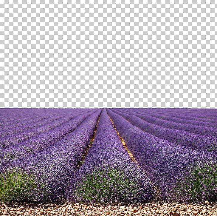 Lavender field clipart image free download U85b0u8863u8349u56ed PNG, Clipart, Color, English Lavender, Field ... image free download